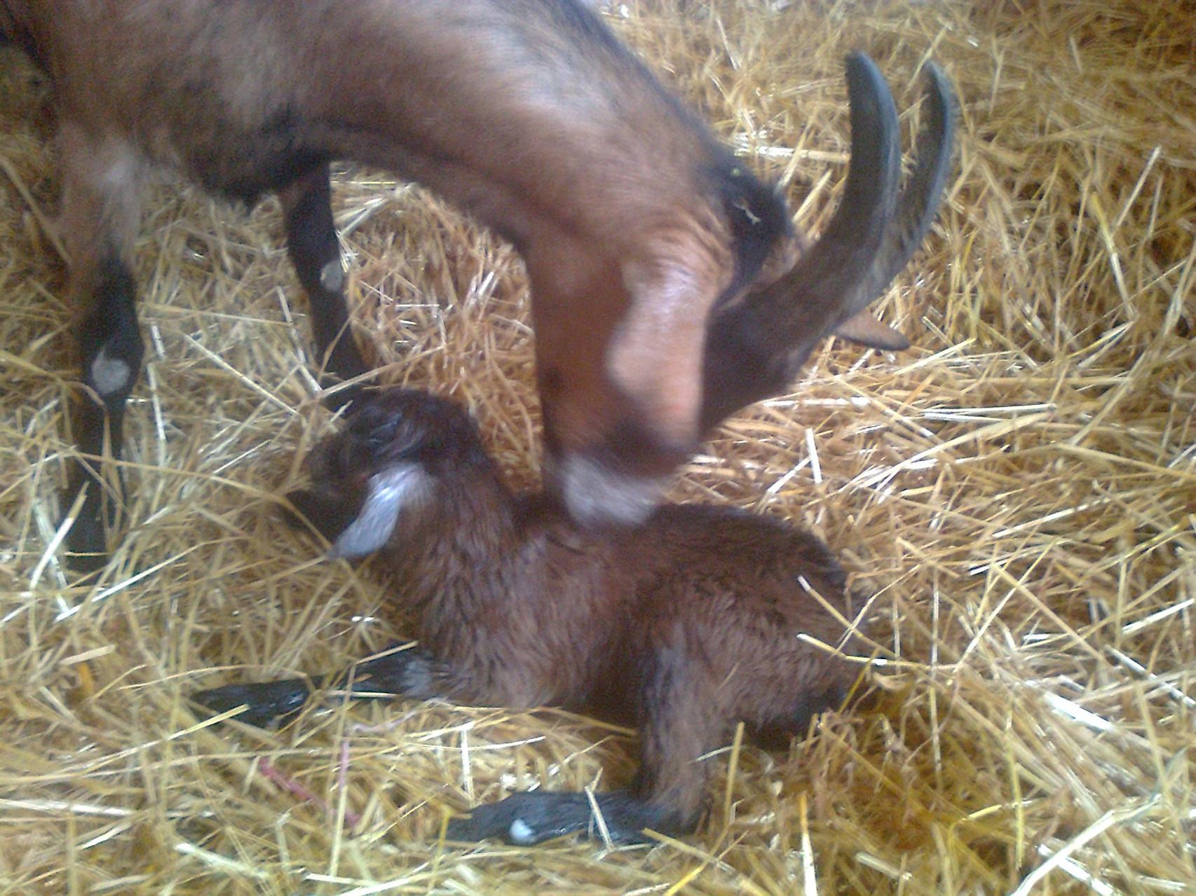 Lucy gleich nach der Geburt