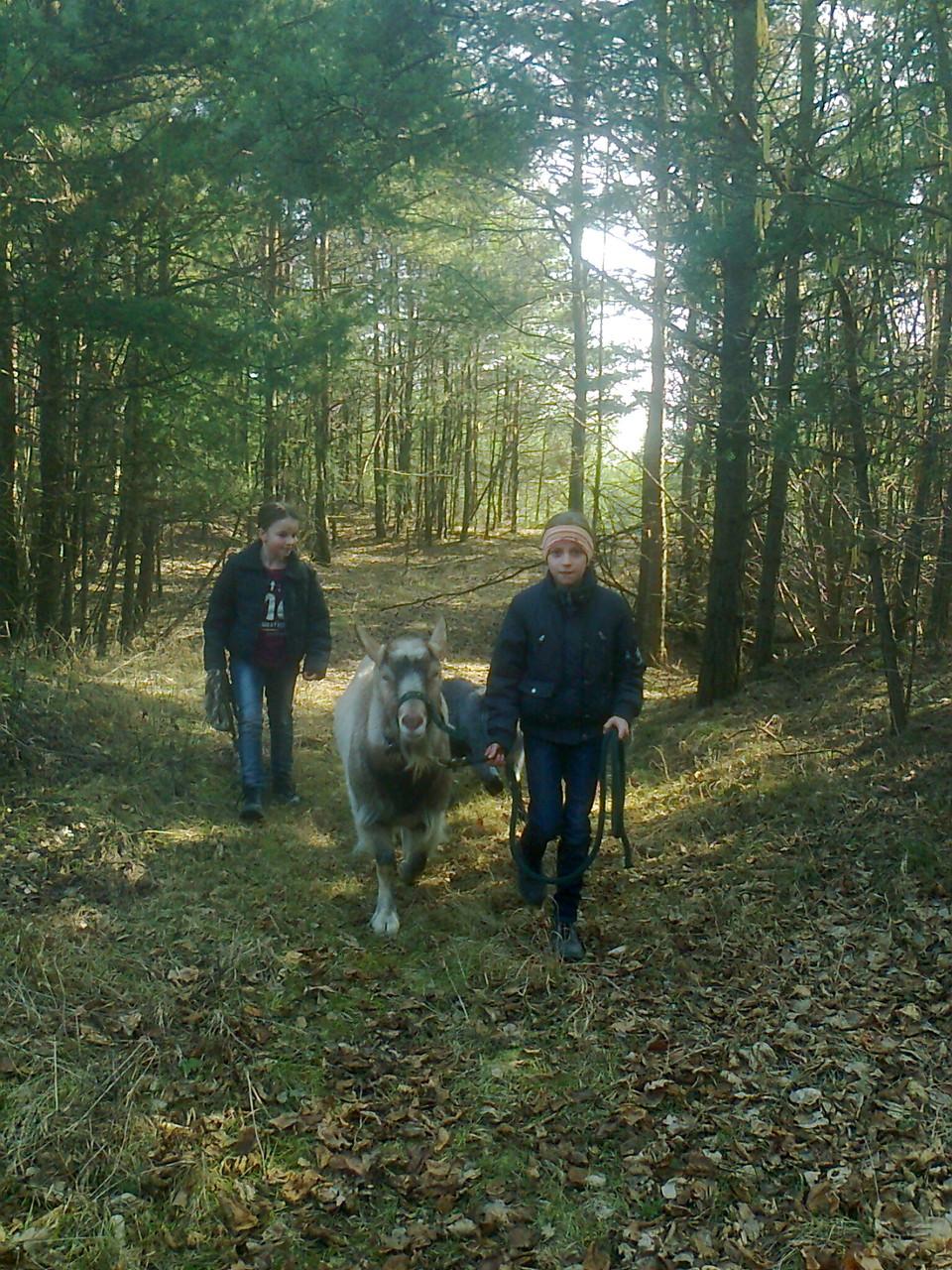 Spziergang im Wald