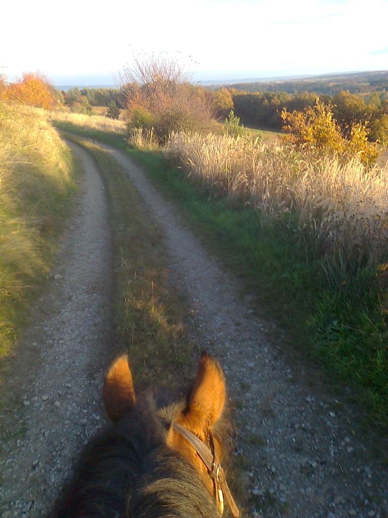Am Rücken der Pferde......