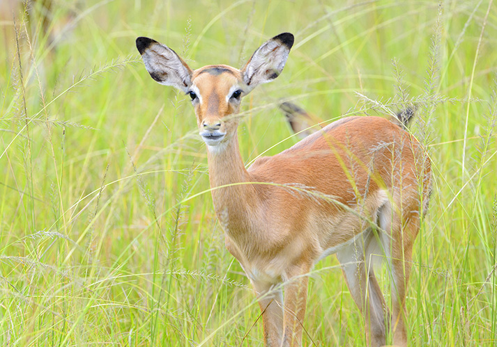 Safari in Akagera