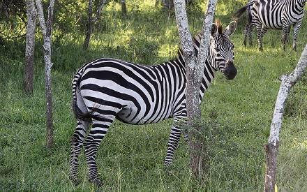 wildlife-uganda-tour.jpg