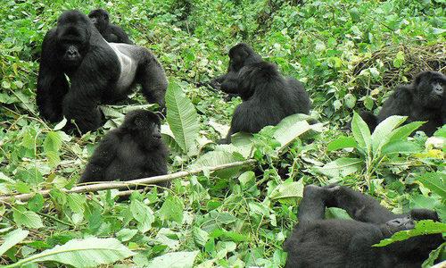 uganda_gorilla _tour.jpg