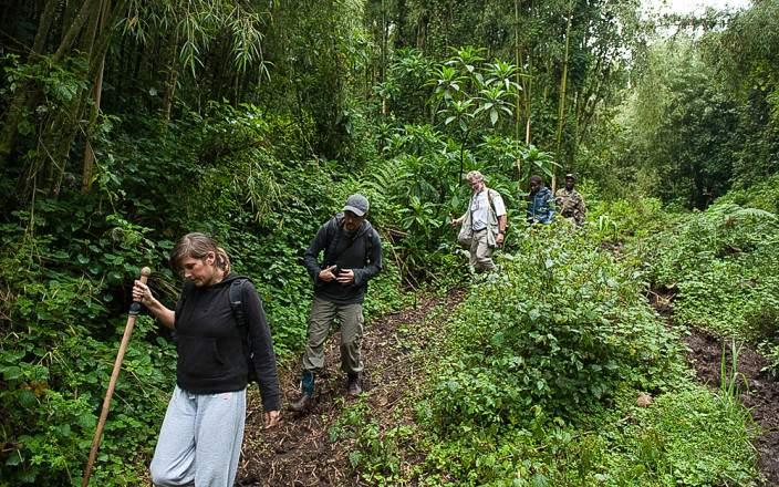 gorilla-trekking-uganda-safari.jpg