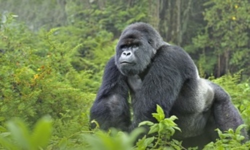 uganda_tours.jpg