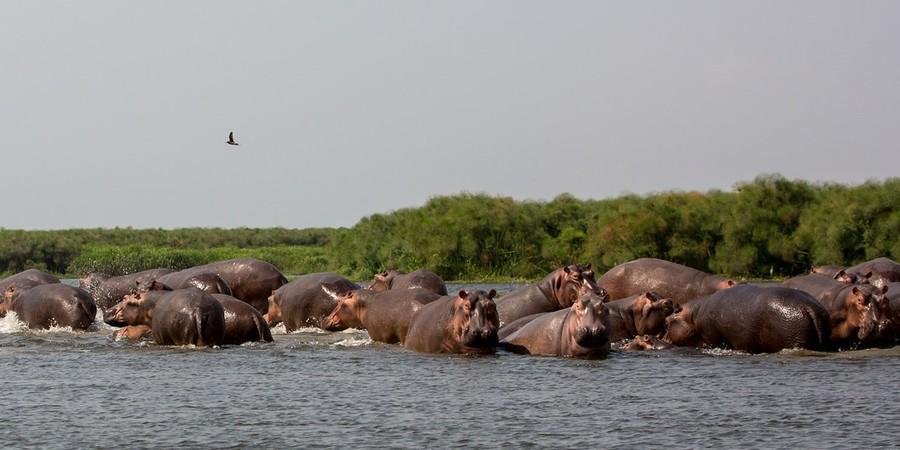 Uganda -Hippo.jpg