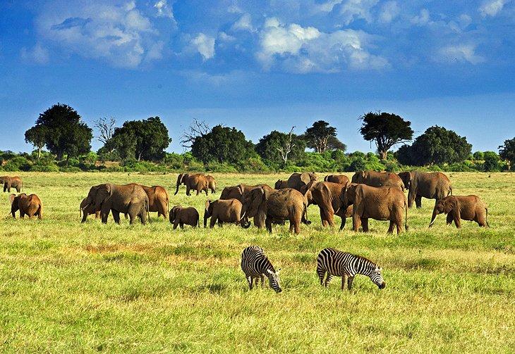 Tsavo-National-park.jpg