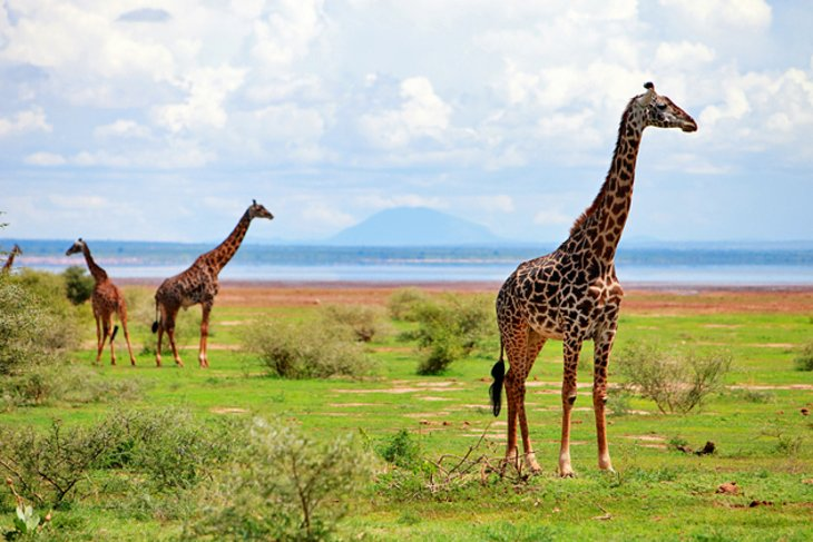 Lake-Manyara-National-Park.jpg