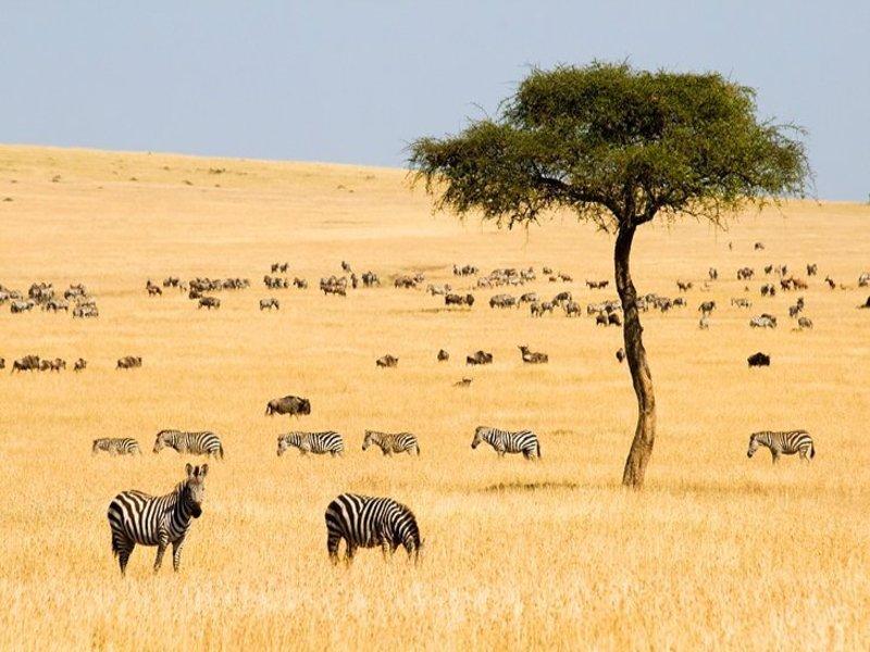 Maasi-Mara-National-Reserve.jpg