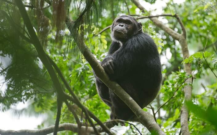 uganda_gorilla_trekking_tour.jpg
