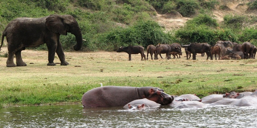 Uganda-Wildlife-Safaris-jpg