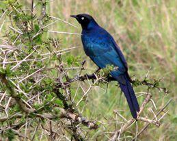 birding_uganda.jpg