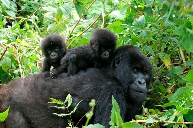Bwindi -Forest -Impenetrable-National-Park.jpg