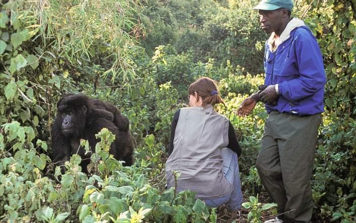 gorilla_trekking_rwanda.jpg
