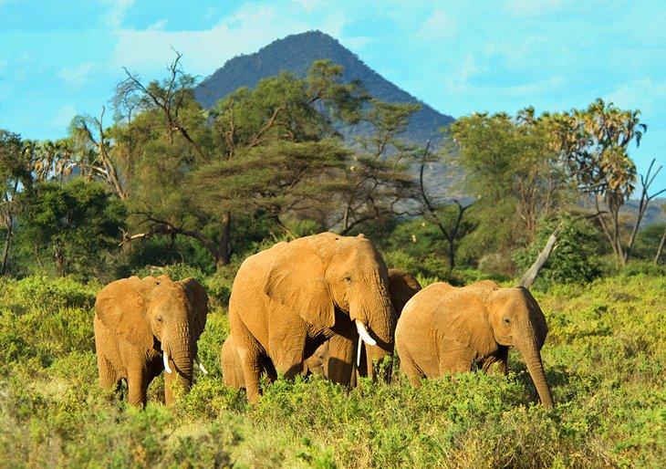 Samburu- Buffalo Springs-  Shaba- National -Reserves.jpg
