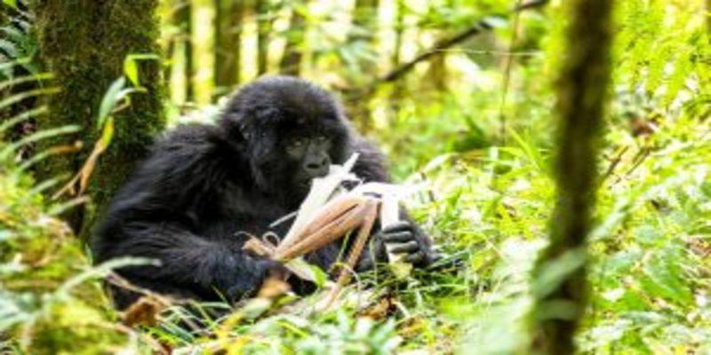 Bwindi -Forest -Impenetrable-National-Park.jpg