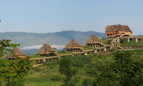 uganda_tours_gorilla_tracking.jpg
