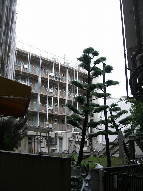 中庭。市街地住宅では珍しく、敷地が別になった遊園があります
