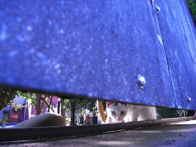 団地で見かけたネコさん