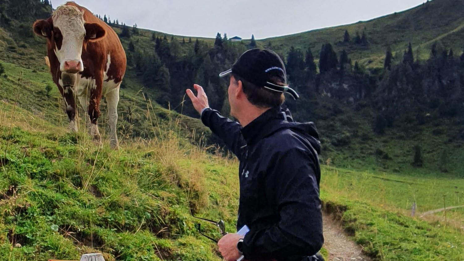 ...stand eine Kuh vor mir!