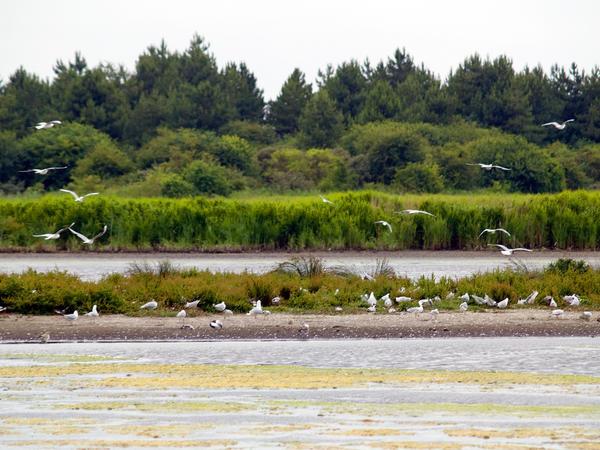 le Parc du Marquenterre et la découverte des oiseaux