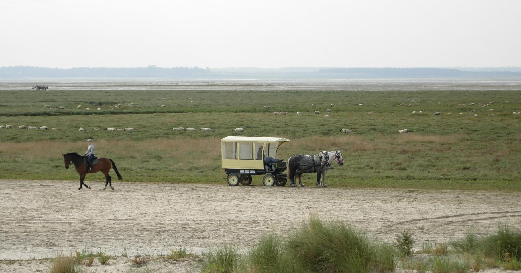La calèche de notre circuit découverte en Baie de Somme