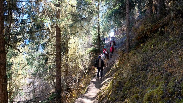 Die ersten Etappen führen uns durch herrliche Bergwälder