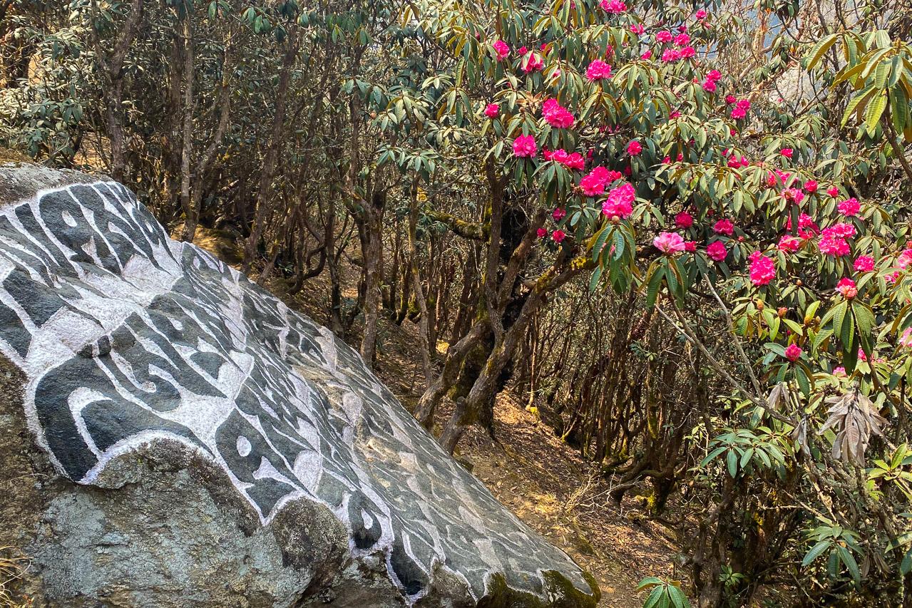Die ersten Rhododendren beginnen zu blühen in der Region um Namche Bazar
