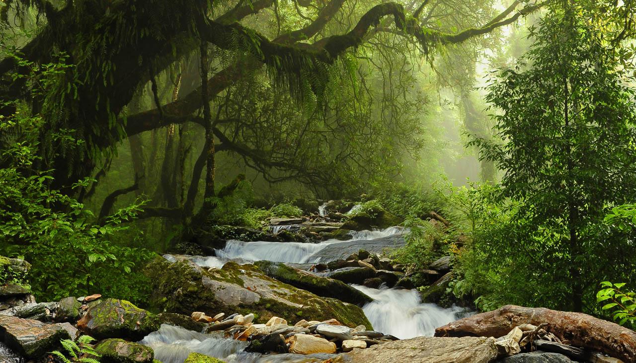Die Wälder in Bhutan sind sehr üppig, in tiefen Lagen subtropisch
