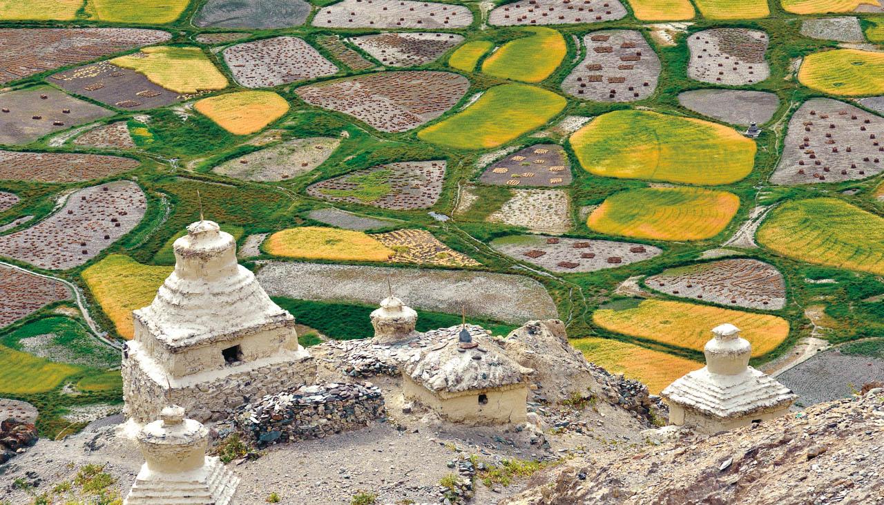 Gerstenfelder in Stongde in Zanskar