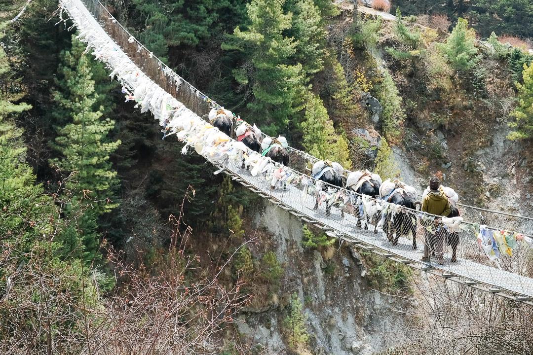 Yaks überqueren eine Hängebrücke auf dem Weg nach Tengboche