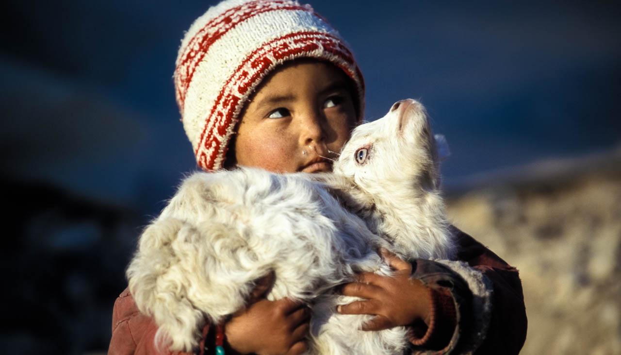 Ladakhisches Kind mit Kaschmir-Ziege