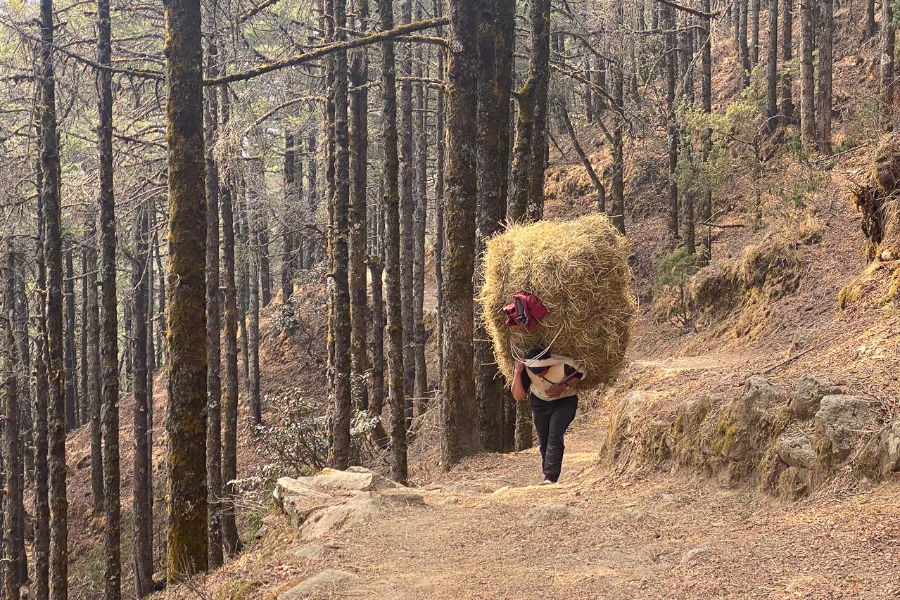 Träger mit «leichtem» Touristengepäck sind nur wenige unterwegs, die meisten tragen «schwere» Lasten für sich oder für andere Einheimische