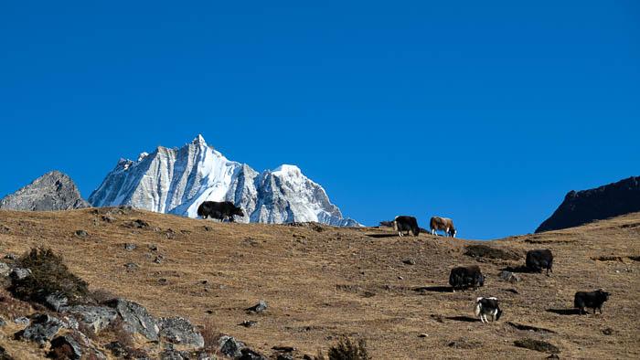Am Fuss des heiligen Masagang weiden bhutanesische Hirten ihre Yakherden