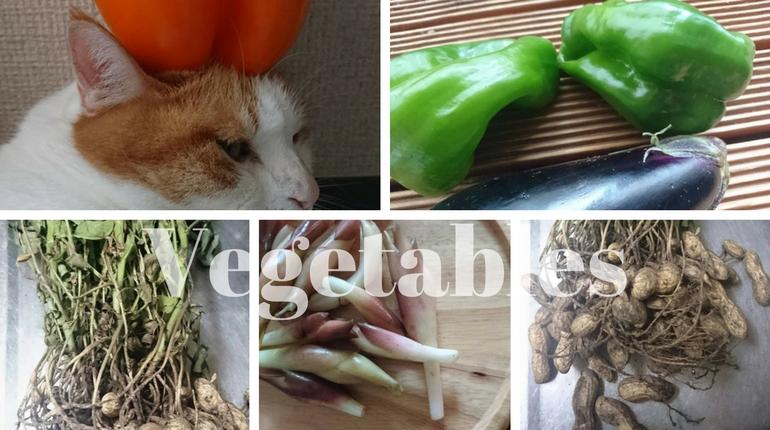なるたん、野菜を頂く