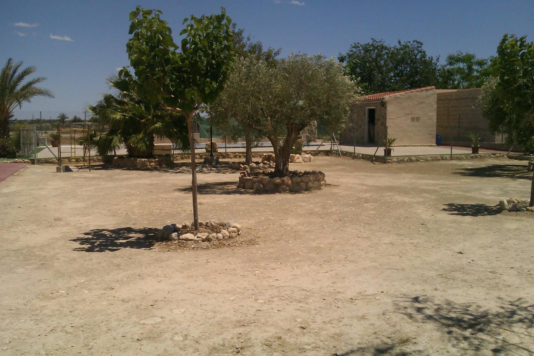 Gartenansicht - mediterrane Bäume. Palmen- und Kakteeninseln