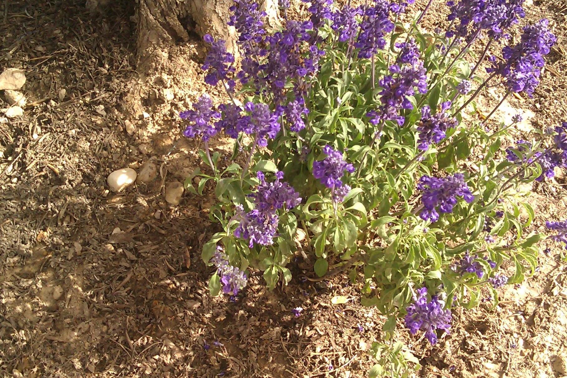 Mediterrane Bepflanzung in prächtigen Farben