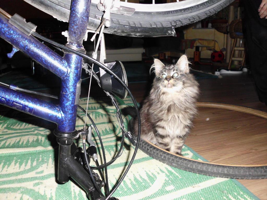 Hm, Fahrrad fahren wäre ja auch was für mich