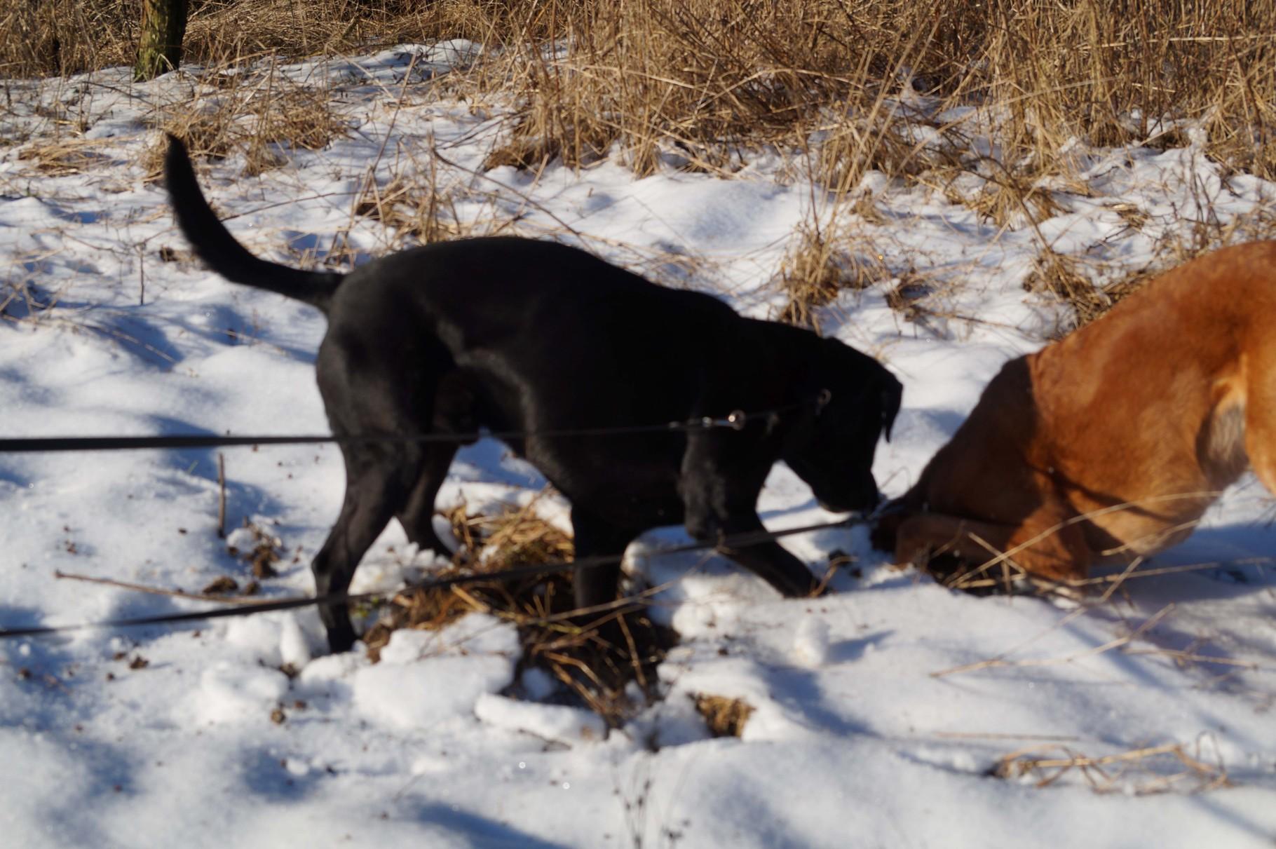 Unsere Hunde im Schnee