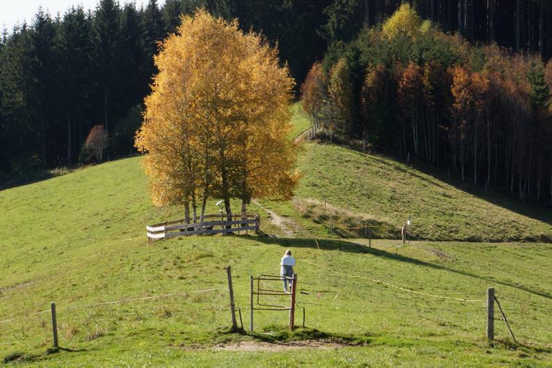 Herbstwanderung im Allgäu