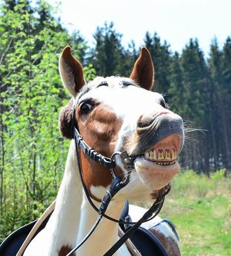 Die Zahnprobleme des Pferdes - Pferdephysiotherapie München
