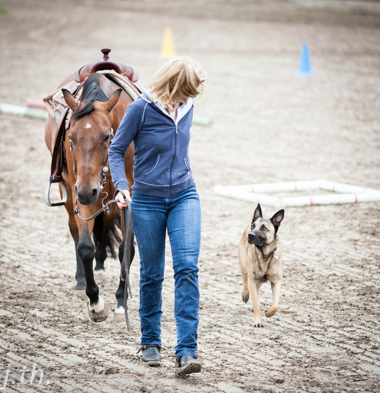 Horse & Dog Trail Workshop