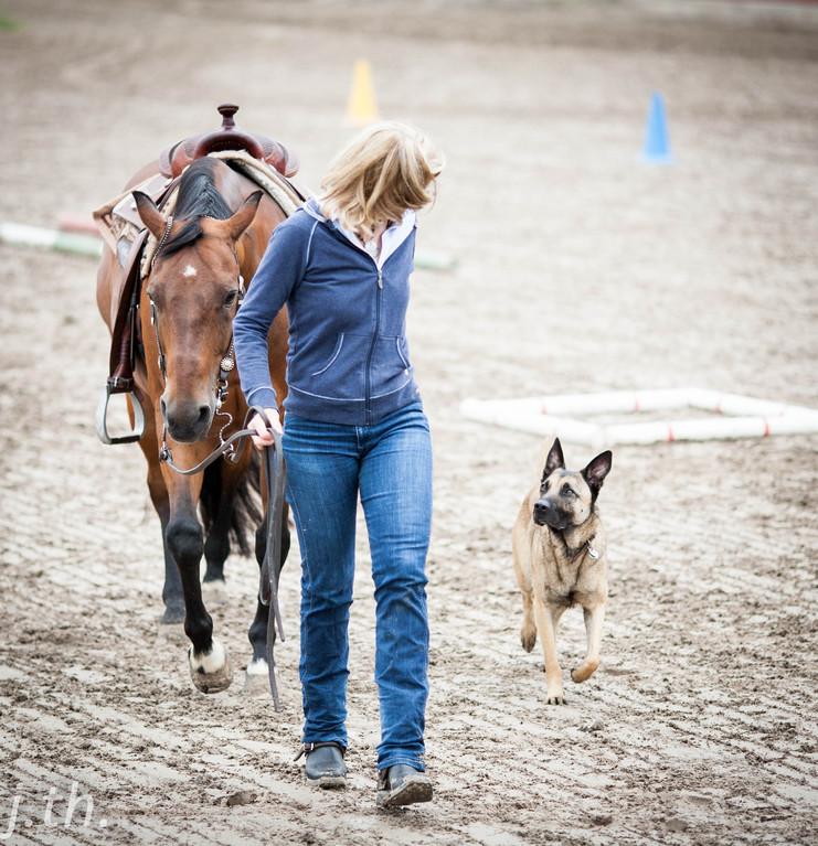 Horse & Dog Trail Workshop