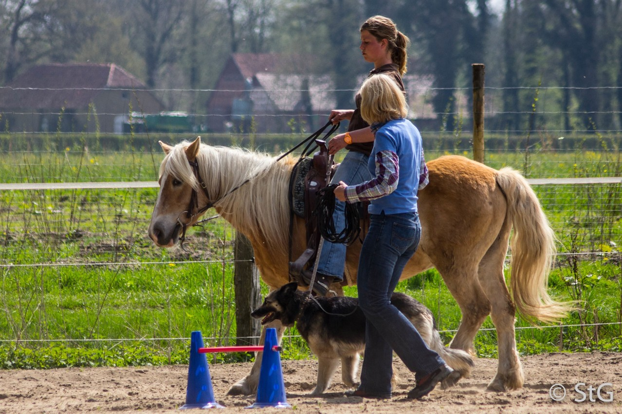 beim Horse & Dog Trail Workshop