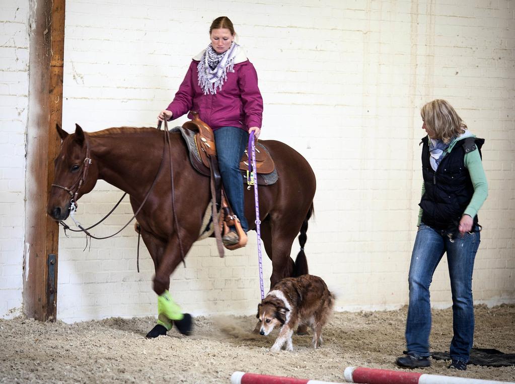 Hund an' s Pferd - Ausbildungsserien