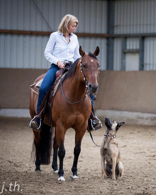 Horse & Dog Trail Basis-Training