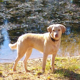 Sula mit 3 Jahren