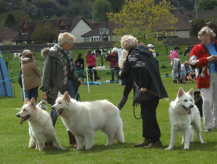 AMBER, TUG AND BEN AT LANGFORD SHOW, MAY 2015