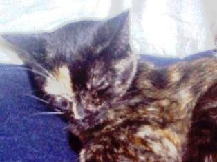 CATTY CAT, PRECIOSA HEMBRITA DE 1 AÑO APROX. CARIÑOSA, ESTERILIZADA