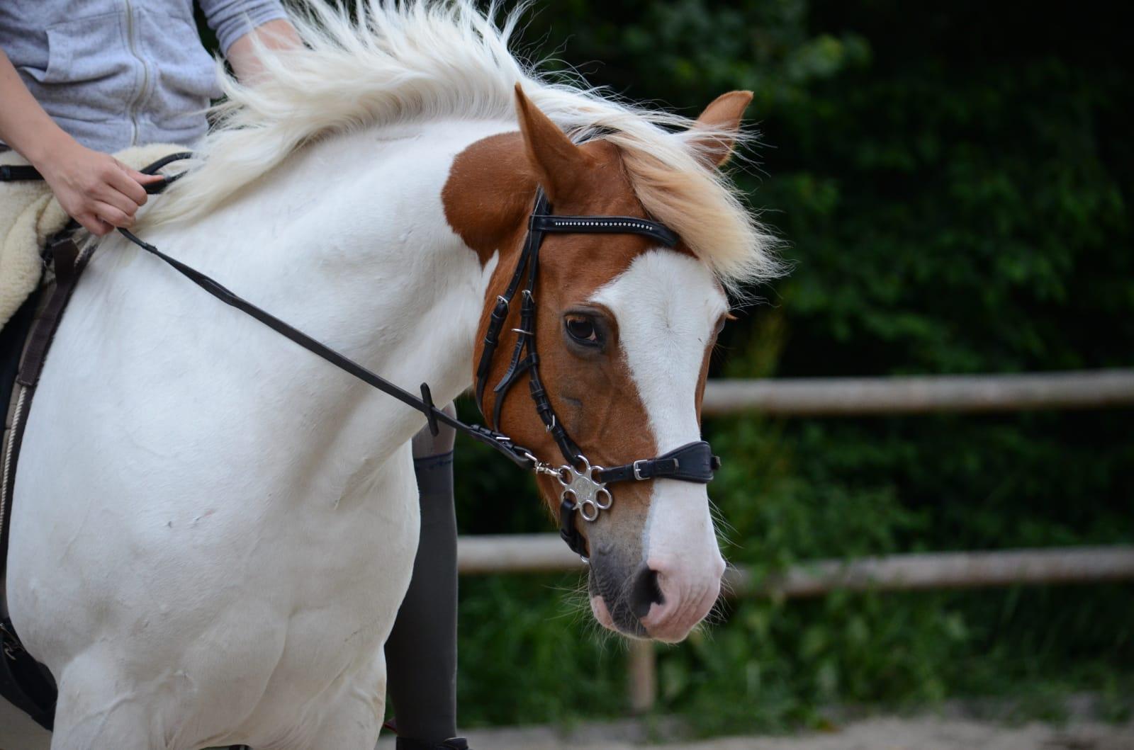 Ponymix, Wallach - Caspar - von Steffi S.
