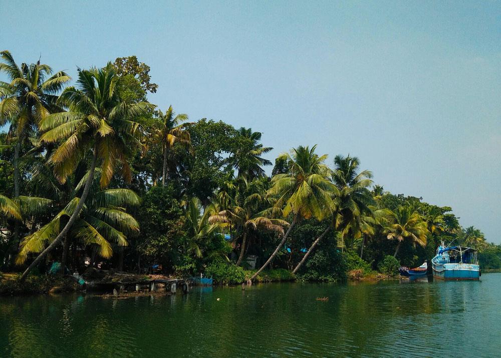 Des cocotiers à perte de vue le long des backwaters